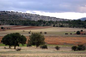 Vista de sabinas en el Lugar de Interés Comunitario situado entre las localidades sorianas de Ciria y Borobia.