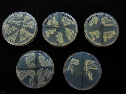 Bacterias autóctonas contra la contaminación ambiental