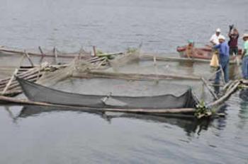 Ampl an el proyecto de tilapia en jaula flotante en la for Construccion de jaulas flotantes para tilapia