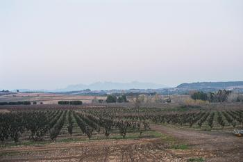 The Penedès region of Catalonia and its vineyards at sunset with Montserrat in the background