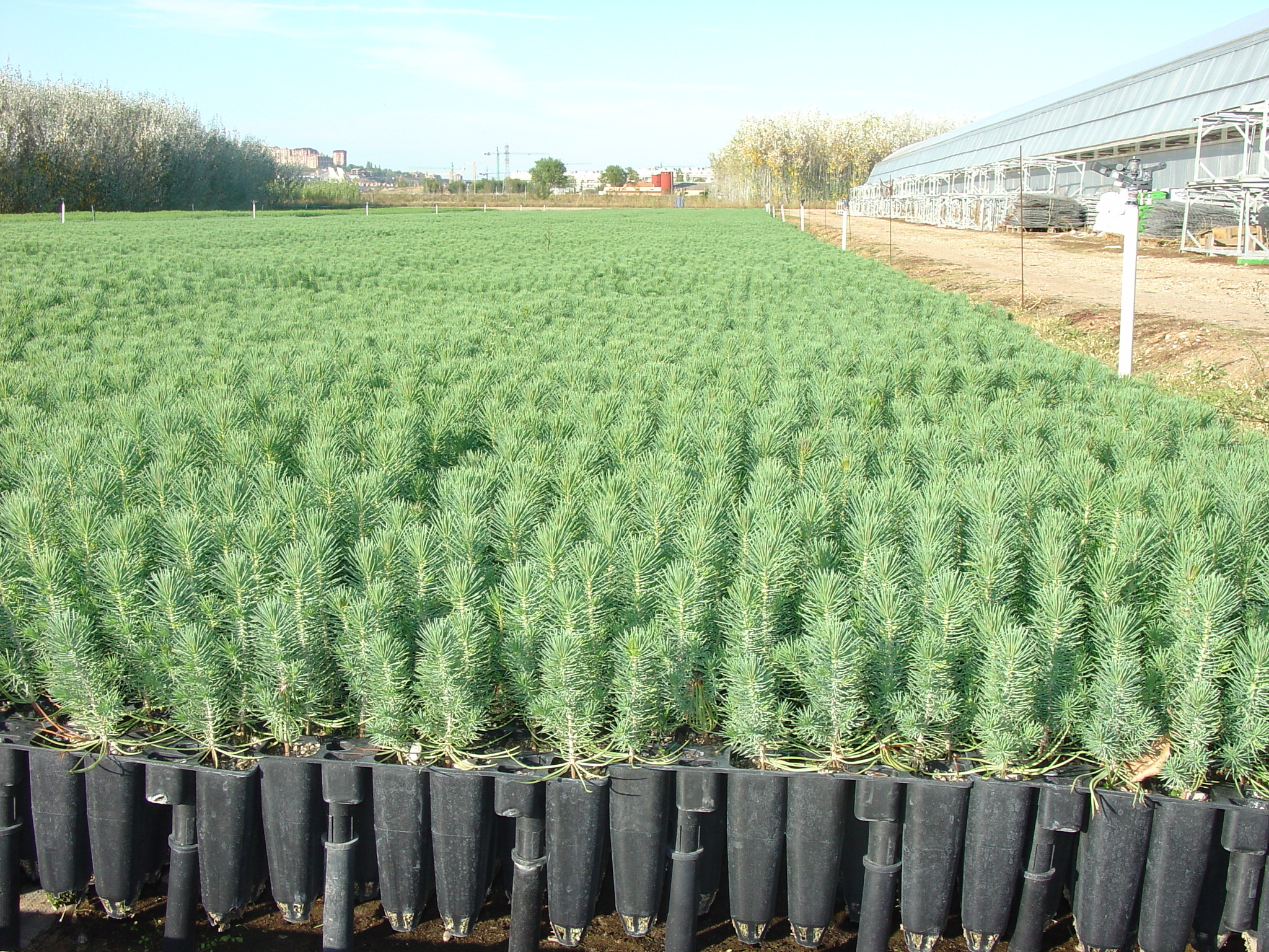 Desarrollo sustentable viveros 10 28 13 for Conclusion de un vivero