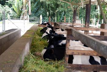 Vacas en un establo.